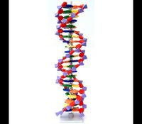 DNA 22 lag byggesæt Molymod