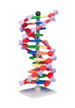 DNA model 12 lag (Molymod)